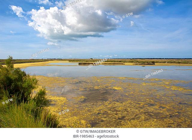 Marais du Fier d'Ars swamp, Ars en Re, Ile de Re island, Departement Charentes Maritime, France, Europe