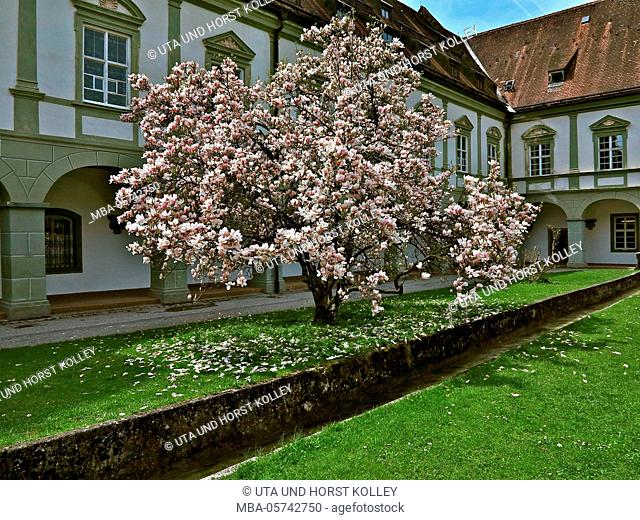 Arcade court in the Benediktbeuern Abbey, magnolia tree, Upper Bavaria, Bavaria, Germany