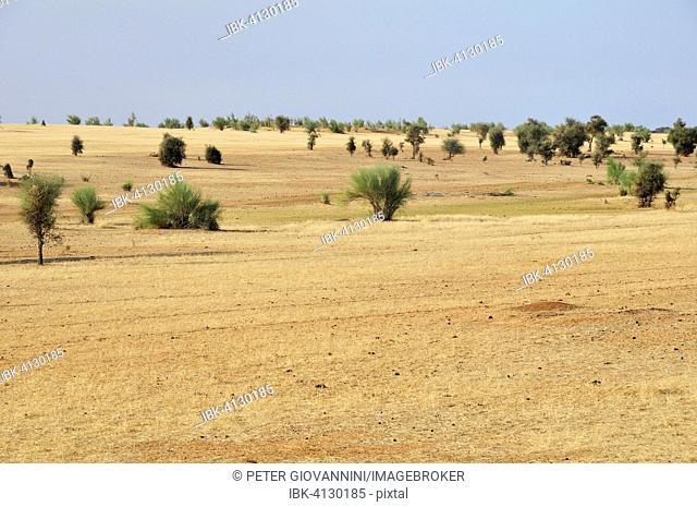 Veldt, Aleg, Brakna region, Mauritania