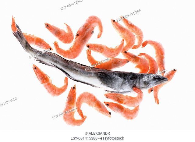 fish and shrimp on white