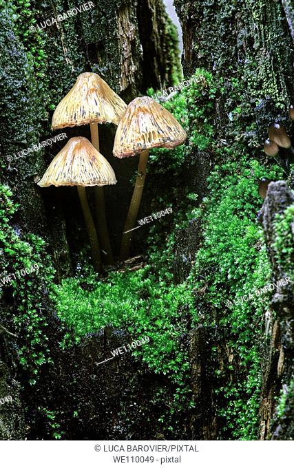 Three little mushrooms inside a trunk - Milan, Italy