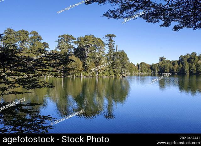 Trees reflected in Captren lake. Conguillio National Park. La Araucania. Chile