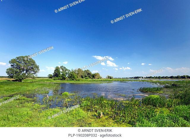 Tributary stream of the river Oder at Oderbruch, moorland landscape near Oderberg, Brandenburg in eastern Germany