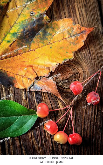 A close up picture of a yellow maple leaf and a twig of crabapples and a green leaf on old wood boards