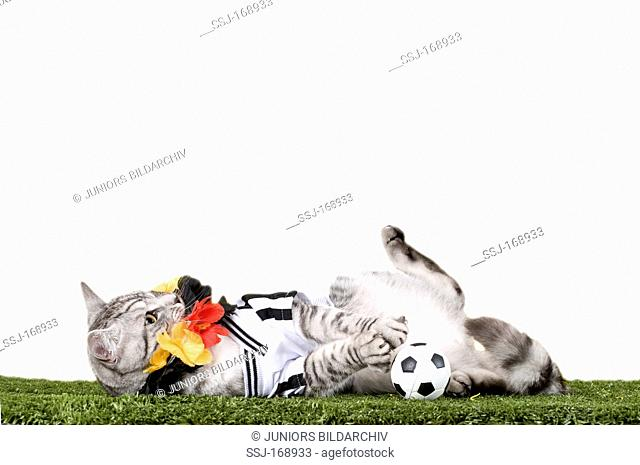 021f7aef9 Domestic Cat. Tabby adult dressed in the jersey of the German National  Football Team with