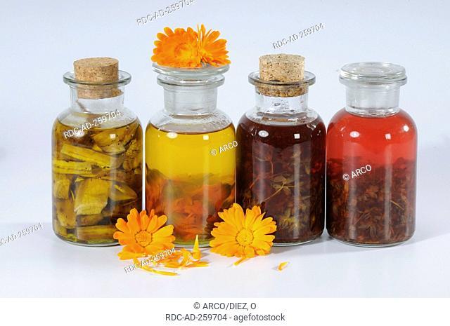 Herb oils with marigold comfrey St John's wort lavender