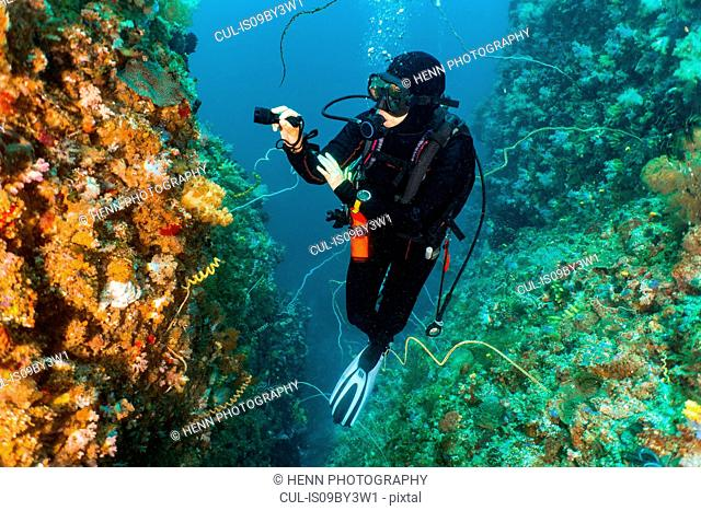 Female scuba diver looking at colourful coral at underwater canyon, Komodo Island, Nusa Tenggara Timur, Indonesia