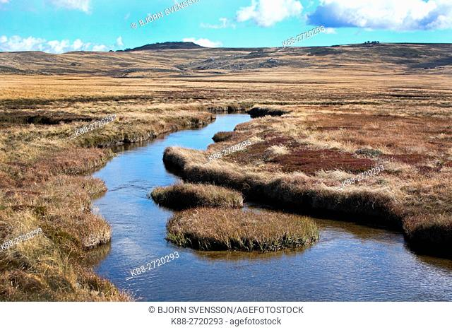 Creek at Bogong High plains in the Victorian High Country, Australia