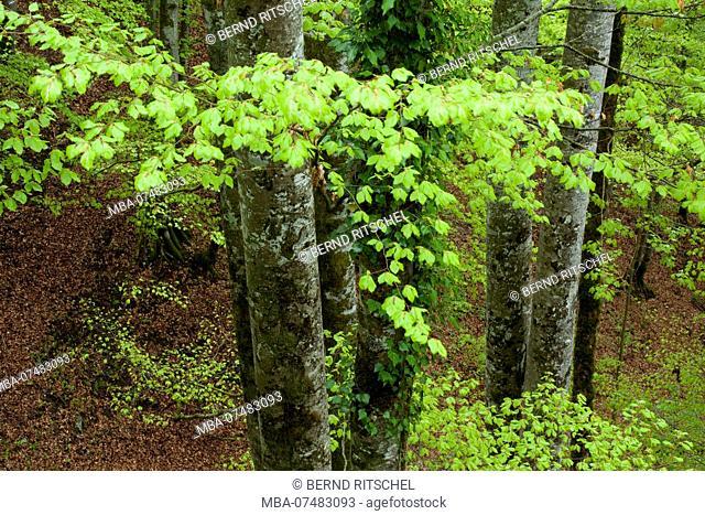 Forest at Thiersee, near Kufstein, Tyrol, Austria