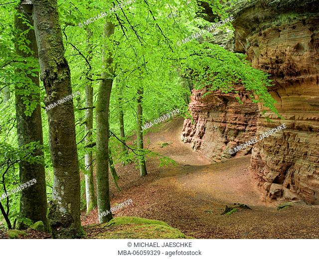 Altschlossfelsen, Palatinate Forest-North Vosges Biosphere Reserve, spring