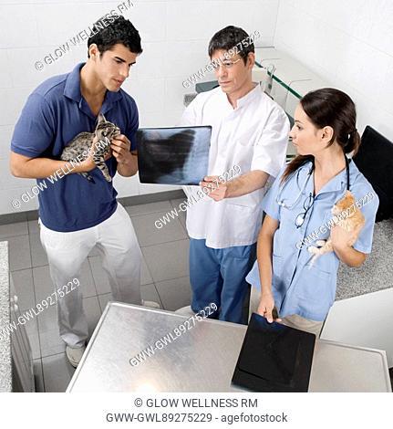 Vet examining a cat's x-ray
