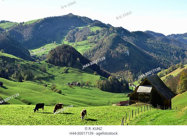 Passwang, grazing cows, barn, farm, Oberbuchen, Oberbeinwil, Hohe Winde, Jurassic mountains, Jura, autumn, autumn colours, Canton of Solothurn, Switzerland