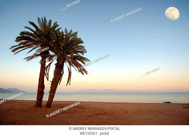 Two palm trees on the beach, moon, Dahab, Red Sea, Egypt, Africa