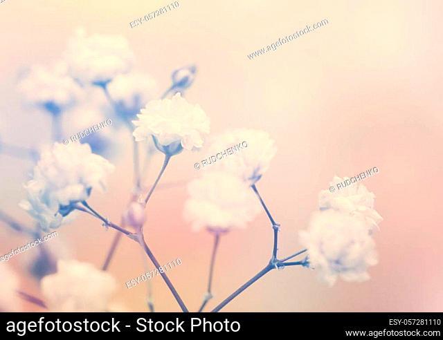 White flower on blur background. Soft focus
