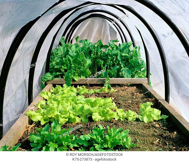 Home garden green house and cold frame