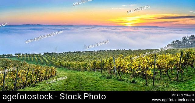 Germany, Baden-Württemberg, Lake Constance, Meersburg, vineyards near Meersburg, view from the mountain trail near Wetterkreuz