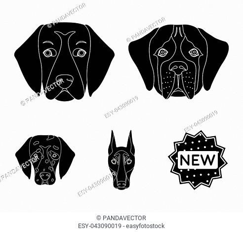 Muzzle of different breeds of dogs.Dog of the breed St. Bernard, golden retriever, Doberman, Dalmatian set collection icons in black style vector symbol stock...
