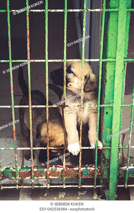 Street dogs in dog shelter waiting to be owned