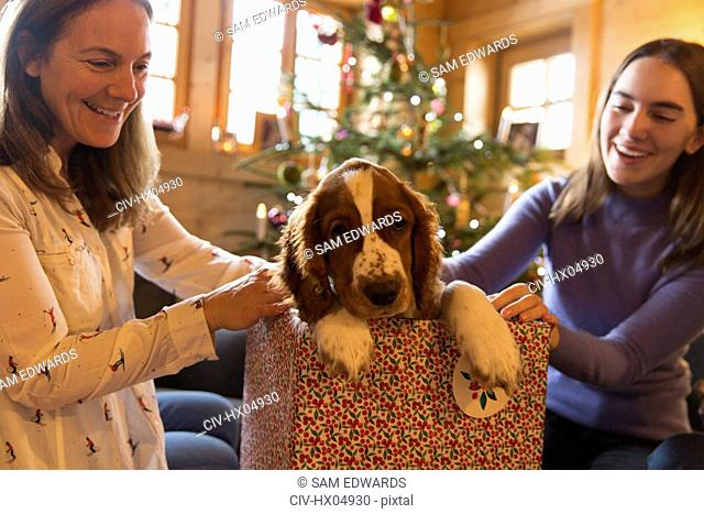 Mother and daughter playing with dog in Christmas gift box