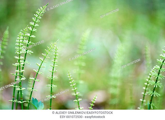 Natural background with fern