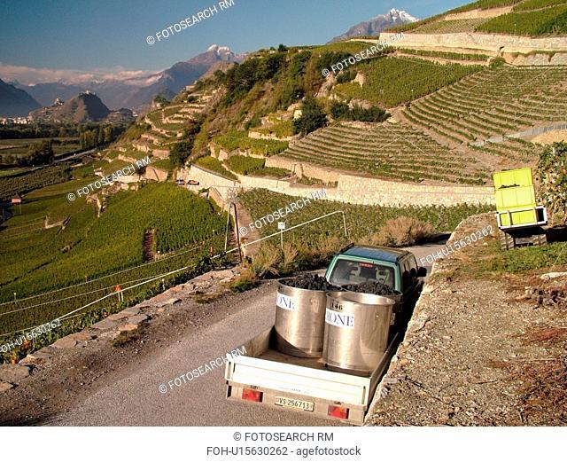 Switzerland, Europe, valais, wallis, Sion, Rhone Valley, Fendant Wine Region, wine harvest, vineyards, steep hillsides