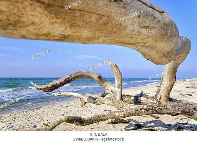 tree skeleton on the beach, Germany, Mecklenburg-Western Pomerania, Nationalpark Vorpommersche Boddenlandschaft
