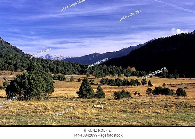Switzerland, Europe, Lukmanier pass, Valle Santa Maria, Canton Ticino, swiss pine trees, autumn, autumnal, Landscape
