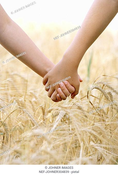 Two children holding hands on a corn field