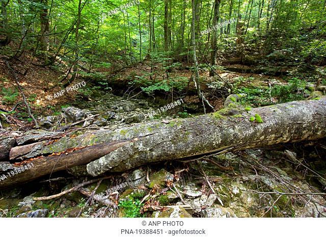 Wildnisgebiet DÆ'rrenstein, Ybbstal Alps, Lower Austria, NiederÃœsterreich, Austria, Europe