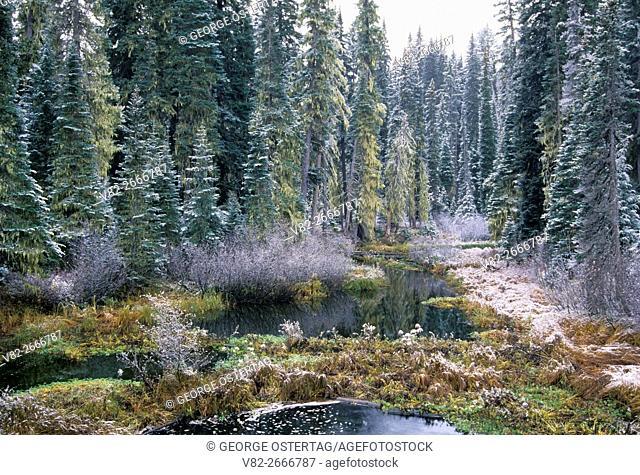 Salt Creek in snow, Willamette National Forest, Oregon