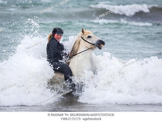 Teenager horseback riding in the sea. Icelandic horse and rider at Longufjorur beach, Snaefellsnes Peninsula, Icelan