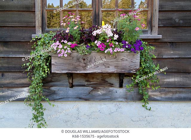 Flower planter on Saltspring Island, British Columbia, Canada
