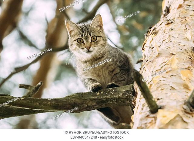 Funny Cat Sitting On A Pine Tree Branch In Summer Forest Or Park