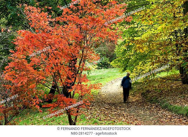 Winkworth Arboretum. National Trust. Godalming. Surrey. England