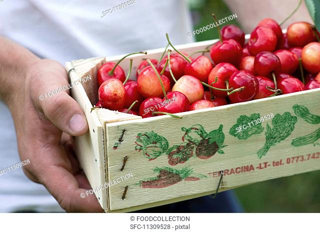 A man holding a crate of cherries