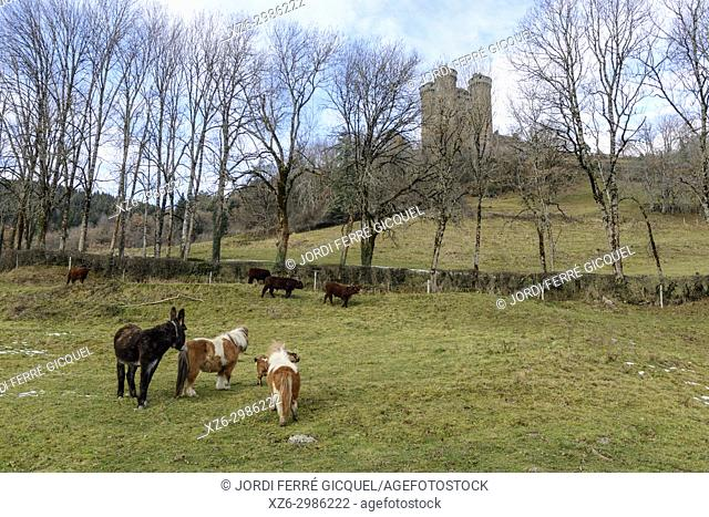 Cattle front the Chteau d'Anjony castle, Tournemire, Cantal department, France, Europe