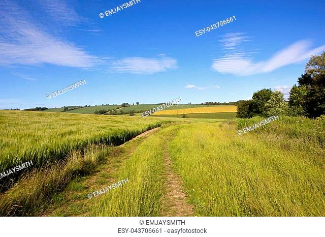 a grass farm track beside a ripening barley crop and a scenic backdrop with trees and hedgerows in the yorkshire wolds under a blue sky in summer