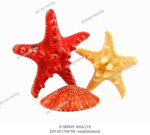 Colored Seashells Scallop and Starfishes Isolated on White