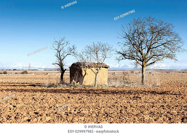 Bare Common walnut tree in an agricultural landscape in the plain of the River Esla, in Leon Province, Spain