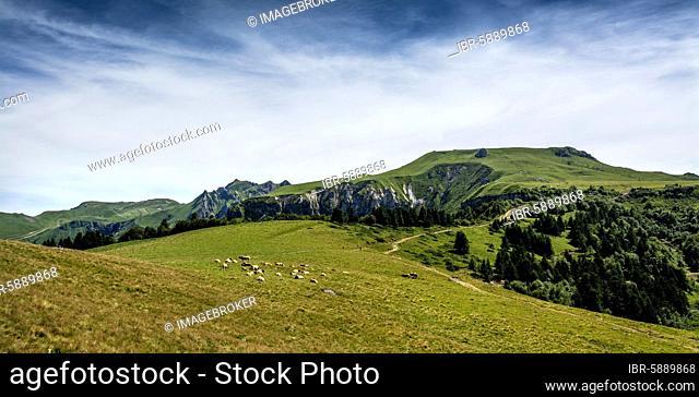 The Sancy massif at back, Auvergne Volcanoes Natural Park, Puy de Dome department, Auvergne-Rhone-Alpes, France, Europe