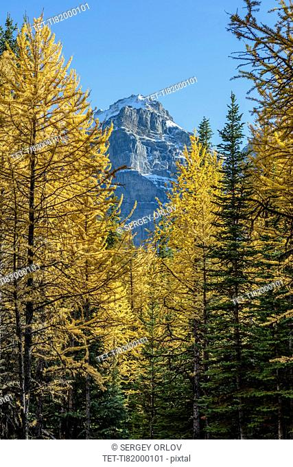 Canada, Alberta, Banff, Trees and mountain peak in Banff National Park