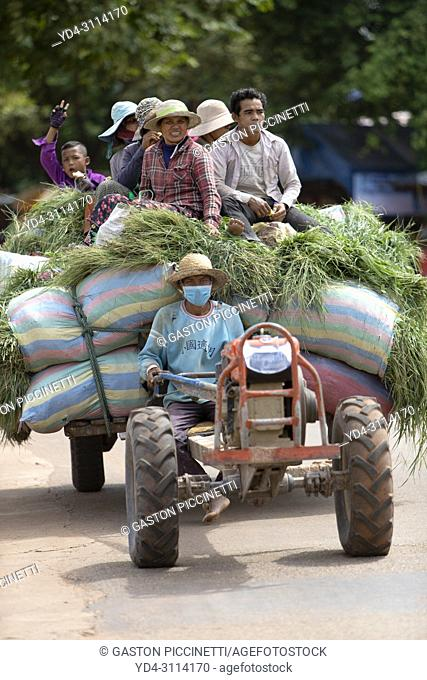 Camp workers on grass bags, Angkor, Siem reap Province, Kingdon of Cambodia