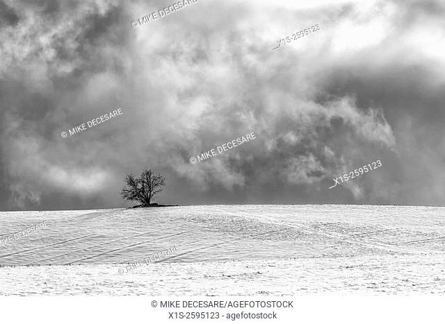 A single tree sits atop a snow covered field on a cold, winter day