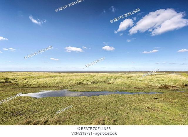 Blauer Himmel mit Schäfchenwolken über den Salzwiesen an der Hamburger Hallig im Kreis Nordfriesland - Hamburger Hallig, Schleswig-Holstein, Germany, 02/09/2014