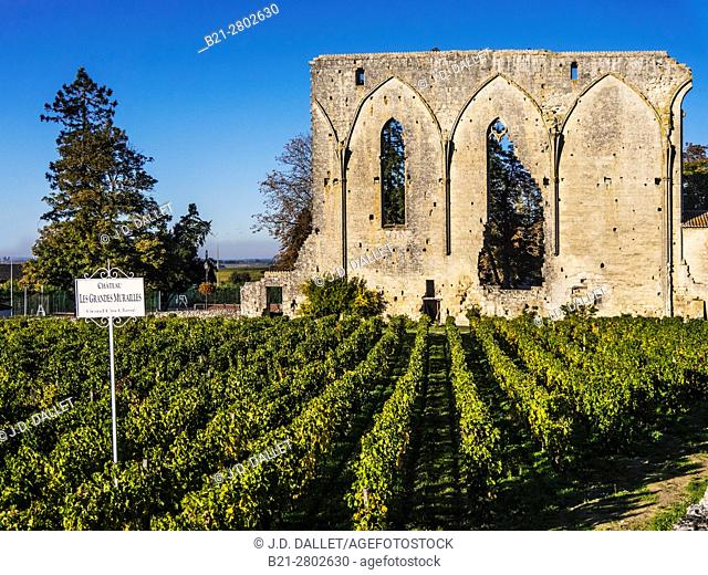 France, Nouvelle Aquitaine-Gironde- at Saint Emilion, one of the famed wines area of the Bordeaux wines districts