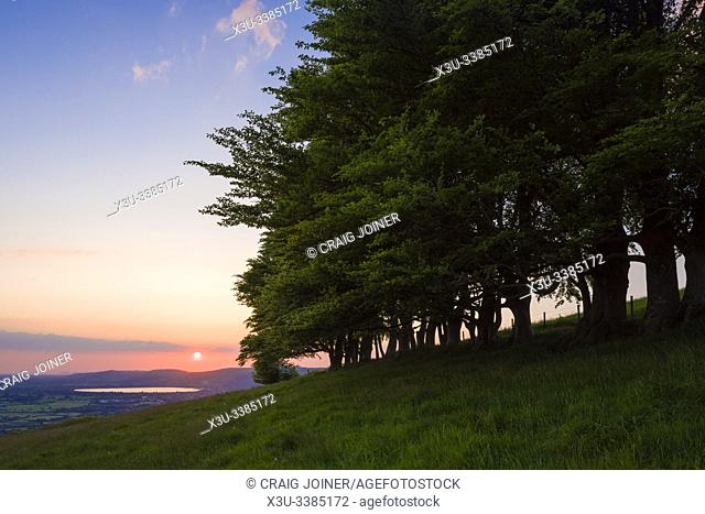Sunset from the beech trees on Draycott Sleights in the Mendip Hills Area of Outstanding Natural Beauty, Somerset, England
