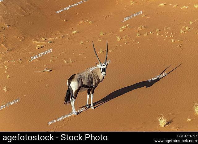 Namibia, Hardap region, Namib desert, Namib-Naukluft National Park, Namib Erg classified World Heritage by UNESCO, Sossusvlei dunes, aerial view