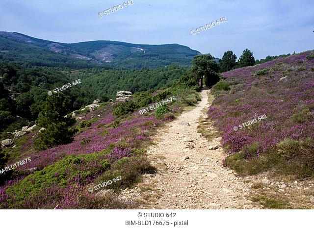 Dirt path on rural hillside