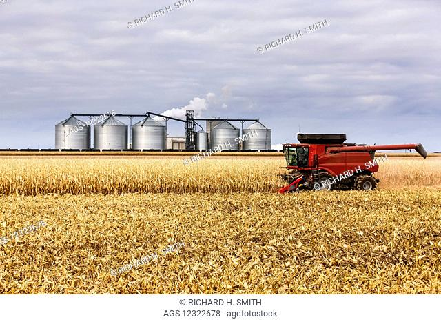 Corn harvest near the Poet Biorefinery, an ethanol producer; Groton, South Dakota, United States of America