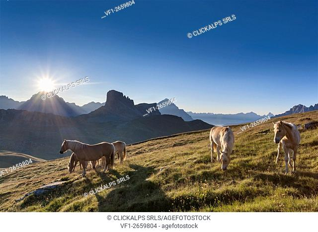 Haflinger horses grazing on the green plain of Mondeval. In the background the Becco di Mezzodì, behind Sorapiss left and right of the pyramid of Antelao